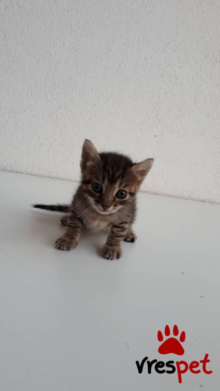 d7cc51cdb2ac Χαρίζεται! Αγγελία για γάτα. Άγνωστο - Ημίαιμο. Τρίκαλα