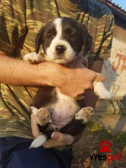 66a037723c32 Αγγελίες για σκύλους