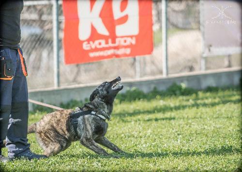 df18cbb3e910 κεντρο εκπαιδευσης σκυλων καρδιτσας Εκπαίδευση Φιλοξενία Καρδίτσα ...